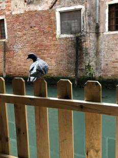 These guys own Venice.